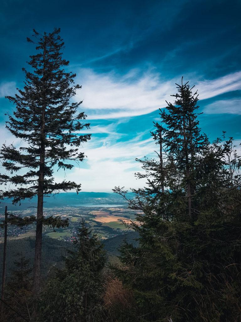 jezioro-zywieckie-wsrod-drzew
